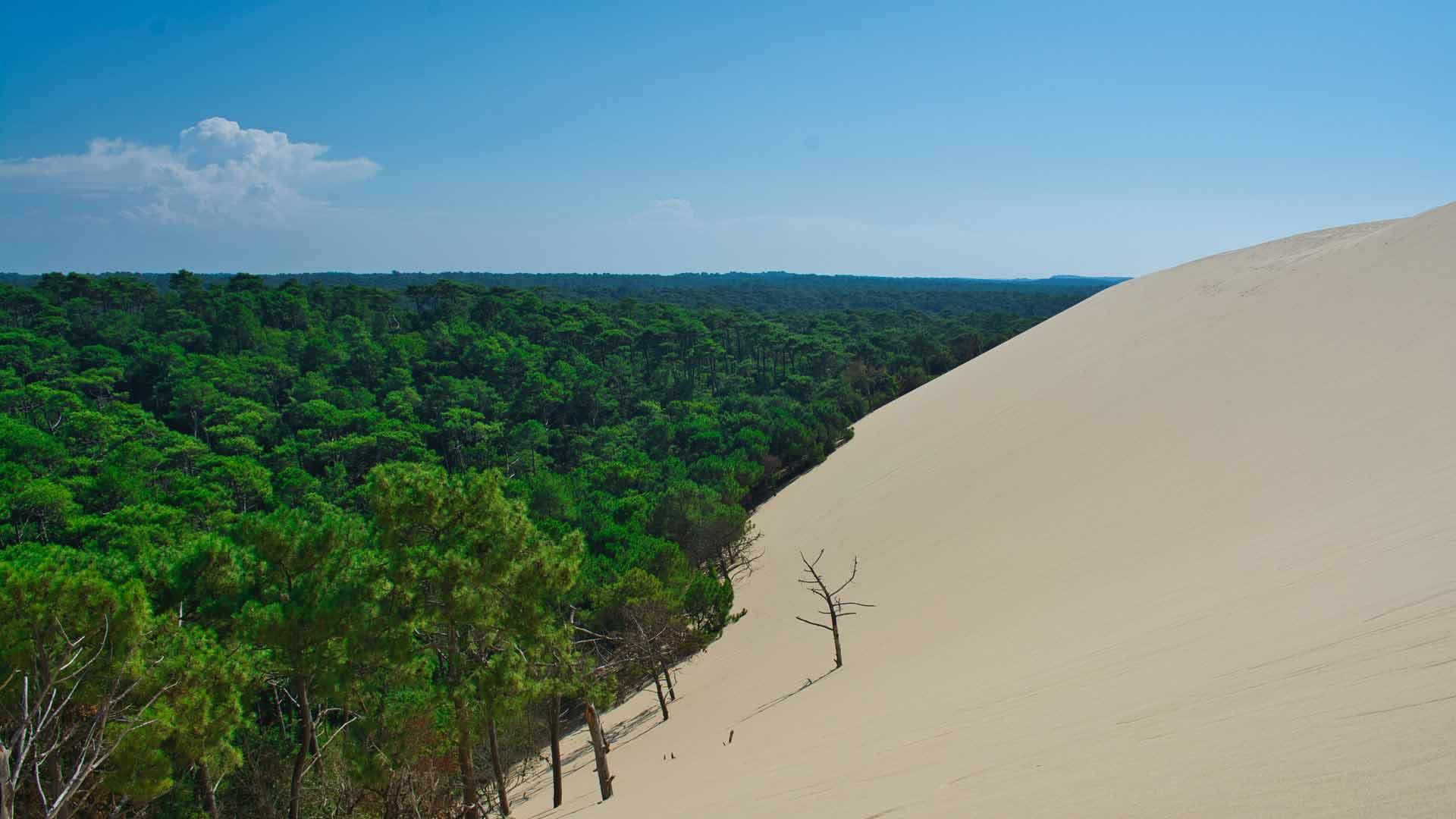 sommet de la dune du pilat